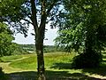 Wildflower meadow, Trent Park.JPG