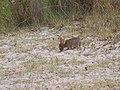 Wildlife on the beach (5816905284) (2).jpg