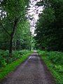 Wildpark Alte Fasanerie Klein-Auheim Waldweg Juni 2012.JPG