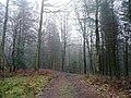 Winter scene, Forest of Dean - geograph.org.uk - 1621973.jpg