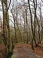 Wolbecker Tiergarten (8).JPG
