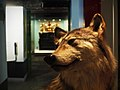 Wolf - Maritime Museum.jpg