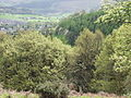Woodland at Cae Madog - geograph.org.uk - 165637.jpg