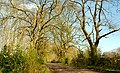 Woodland path near Ballymena (2) - geograph.org.uk - 770019.jpg