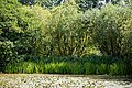 Woods Mill, Sussex Wildlife Trust, England - lake 03.jpg