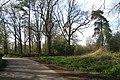 Woods off Pigdown Lane - geograph.org.uk - 1242600.jpg