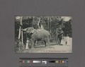 Working elephants in Ceylon (NYPL Hades-2359838-4044603).tiff