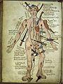 Wound man, Pseudo-Galen, Anathomia; WMS 290 Wellcome L0013467.jpg