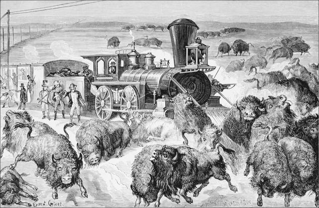 Polaire Buffalo Tribal sud-ouest de bison rouge gris tissu imprimé par Yard A339.18