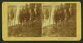 Yo-Semite Falls, Cal, by Kilburn Brothers 2.png