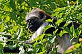 Zanzibar 2012 06 05 4257 (7592166950) (2).jpg