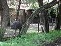 Zoo Kathmandu Nepal (5085877843).jpg