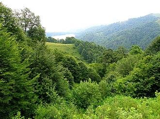 Göygöl National Park - Forest in Göygöl National Park