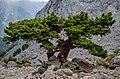 Εθνικός Δρυμός Σαμαριάς.jpg