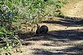 Κουνέλι - panoramio.jpg