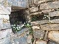 Λουλούδια ανάμεσα στις πέτρες.jpg