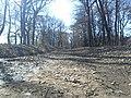 Μονοπάτι στο δάσος της Φολόης - panoramio.jpg