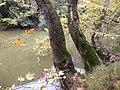 Ο υπέροχος Πηνειός ποταμός.jpg