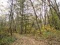 Πλούσια βλάστηση στην περιοχή των Καστανεών.jpg