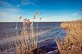 Асвейскае возера 3.jpg