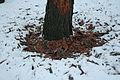 """Дерево, """"обработанное желной4.jpg"""