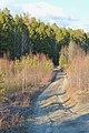 Дорога на станцию Гать - panoramio.jpg