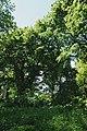 Дубова алея, Яблунів (37).jpg
