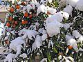 Зима в Афинах - panoramio (4).jpg