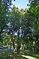 Кипарисовик Сухіна DSC 0031.jpg
