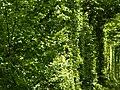Клеванський парк, Рівненський район 2010.JPG
