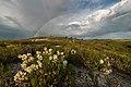 Крейдова флора, веселка та солодушка.jpg