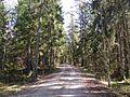 Лесная дорожка - panoramio (13).jpg