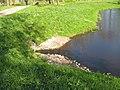 Ораниенбаум. Пруд Подкова, водосброс.jpg