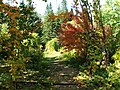 Парк Лисавенко. Осенняя красота.jpg