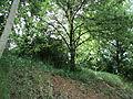 Парк шума Гази Баба во мај (9).JPG