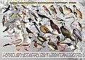 Птахи НЗ Хортиця.jpg