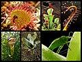 Разне врсте карниворних биљака.јпг.jpg