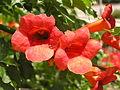 Растения в Седово 090.JPG