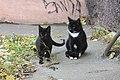 Санкт-Петербург, коты в СПбГМУ (3).jpg