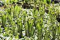 Флора в Ботанічному 6.jpeg