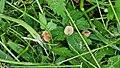 Ясень на Покровской горе - Начало.jpg