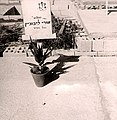 הקבר של אורי לבוביץ בהר הרצל עם המצבה הזמנית.jpg