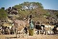 النيجر والإبل.jpg