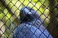 حیوانات باغ وحش مرکزی شهر تفلیس پایتخت گرجستان 31.jpg