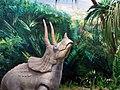 حیوانات تاکسی درمی شده - موزه تاریخ طبیعی شهر قم 05.jpg
