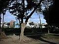 台北市街道攝影(自動定位HOLUX) - panoramio - Tianmu peter (3).jpg