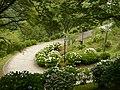 吉野山にて 七曲りのあじさい Hydrangea in Yoshinoyama 2011.7.02 - panoramio (3).jpg