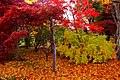 平岡樹芸センター(Hiraoka arboriculture center) - panoramio (12).jpg