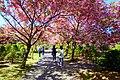 平岡樹芸センター(Hiraoka arboriculture center) - panoramio (16).jpg