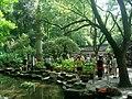 杭州.虎跑(荷花展) - panoramio (1).jpg